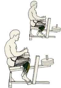 exercices de musculations pour les jambes lvations sur pointes des pieds