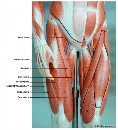 Chiropratique mal entre cuisse et 28 images ces for Liposuccion interieur cuisses photos